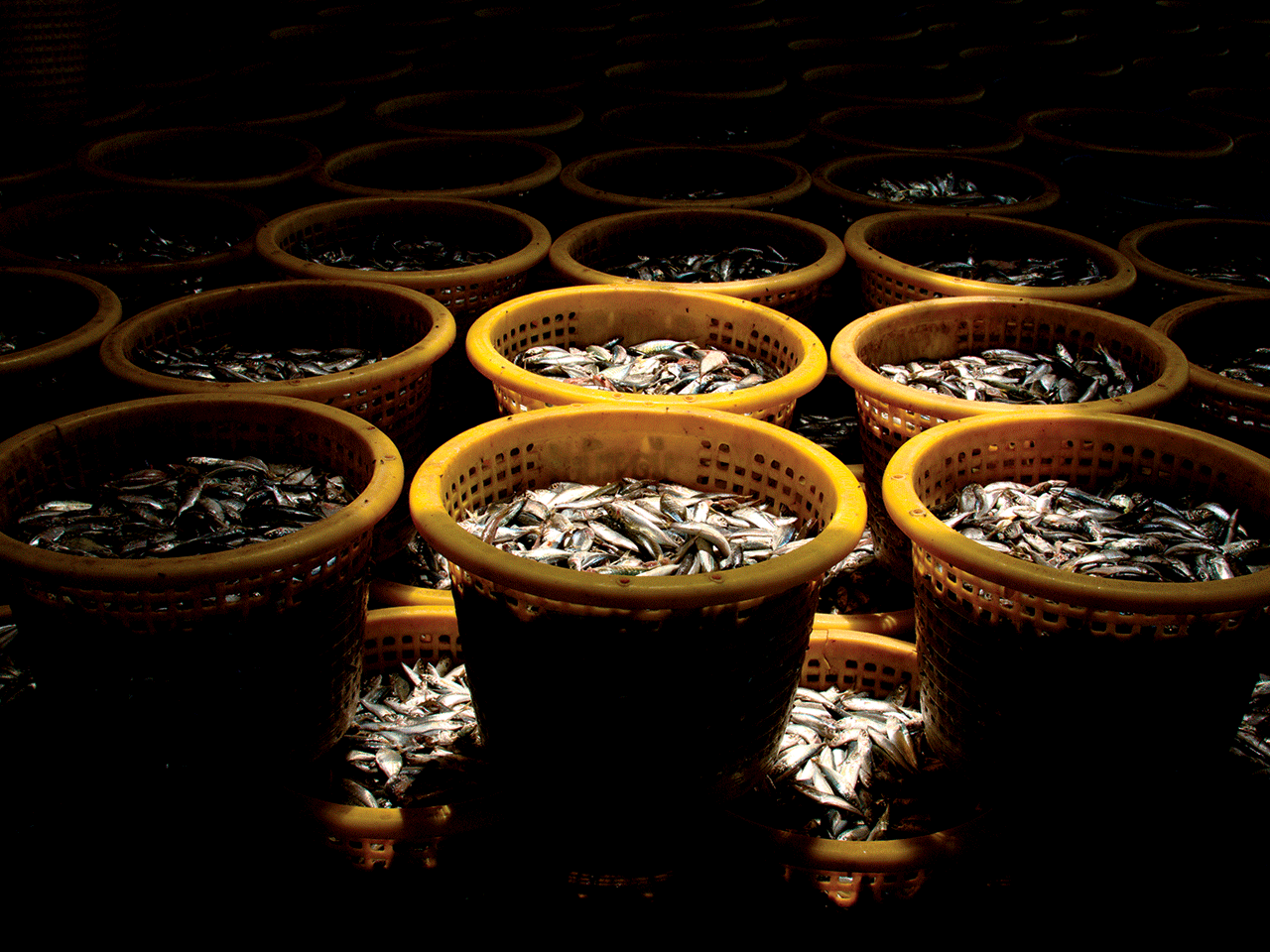 FISH IN BARRELS