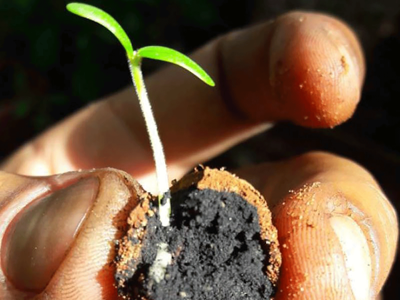 Reforesting Kenya From the Sky with Seedballs
