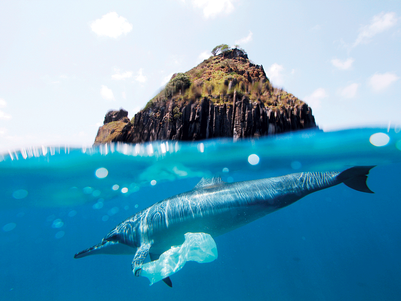 A DOLPHIN IS ENTANGLED WITH A PLASTIC BAG OFF THE COAST OF BRAZIL.